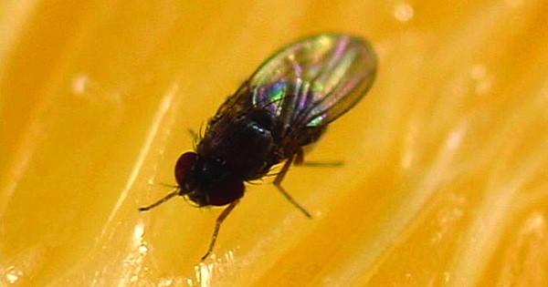 fruitfly-ransomware