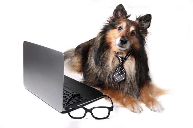 it-disastery-recovery-improves-with-human-and-animal-communication